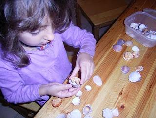 Clasificar conchas