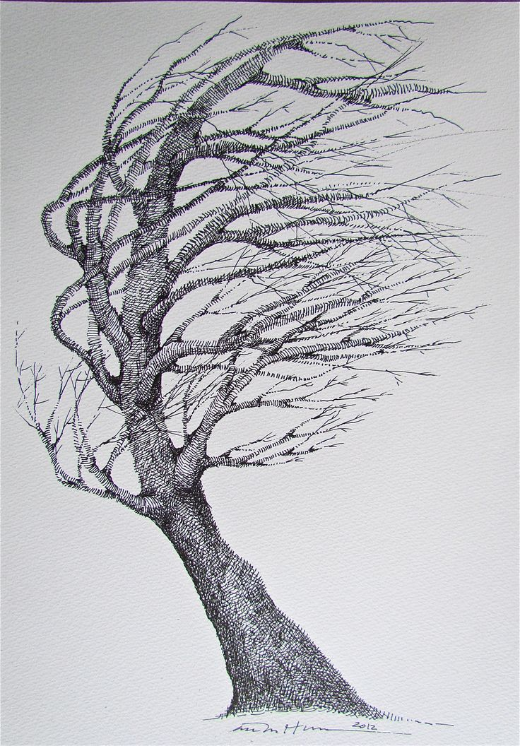 how to draw a elm tree