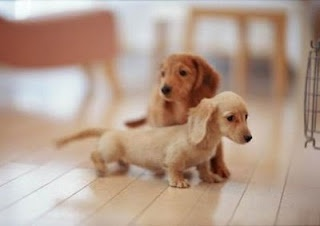 Such cute little puppies