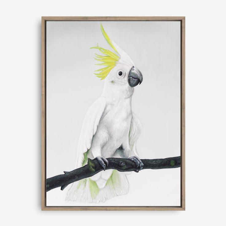 """White Sulfur-Crested Cockatoo Canvas"" By The Print Emporium          THEPRINTEMPORIUM.COM.AU  #ThePrintEmporium #cockatoo #bird #art #canvas #sulfurcrestedcockatoo #wallart #white #scandinavian #beautiful #painted #painting #australia #artwork #artprint #canvas #allwhite #interior #wallart #decor"