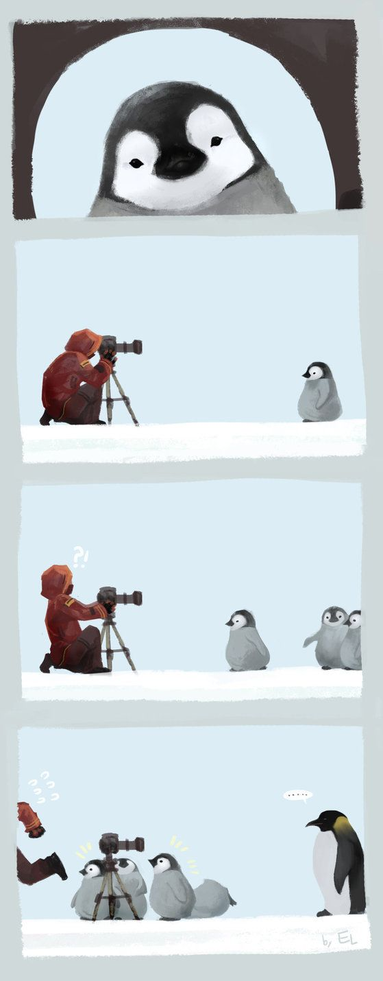 """penguin attack"" 