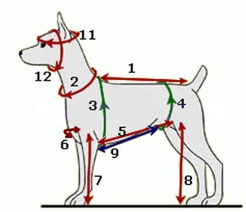 Полная инструкция с пошаговыми фото для изготовления одежды для маленьких собачек. Сшейте своей собачке полный гардероб сами по нашим выкройкам!