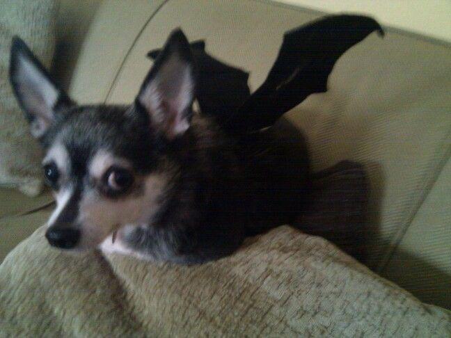 Ripley The Bat