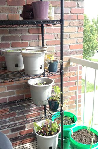 Using vertical space to maximize small space container gardening (via What Grace Cooked)