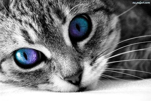 grafika cat, animal, and eyes