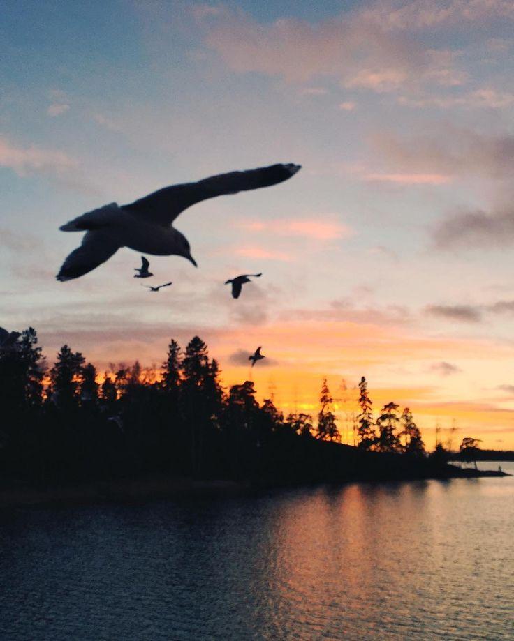 Luontokuvahaaste 1/7. Lokit heittää vuoden viimeisille auringonlaskuille morjenssit. Haastan rakkaan muusani  @kaprinski nSeitsemän päivää seitsemän luontokuvaa.