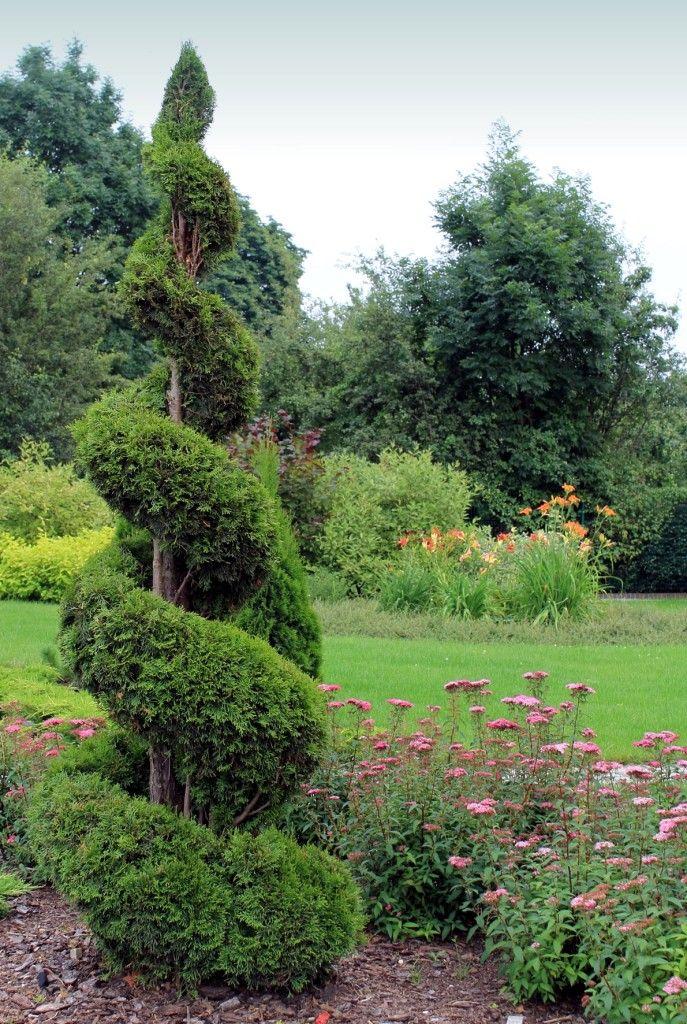 kompozycja roślin z formowanym żywotnikiem zachodnim w ogrodzie przydomowym wg projektu autorstwa PracowniaOkaz
