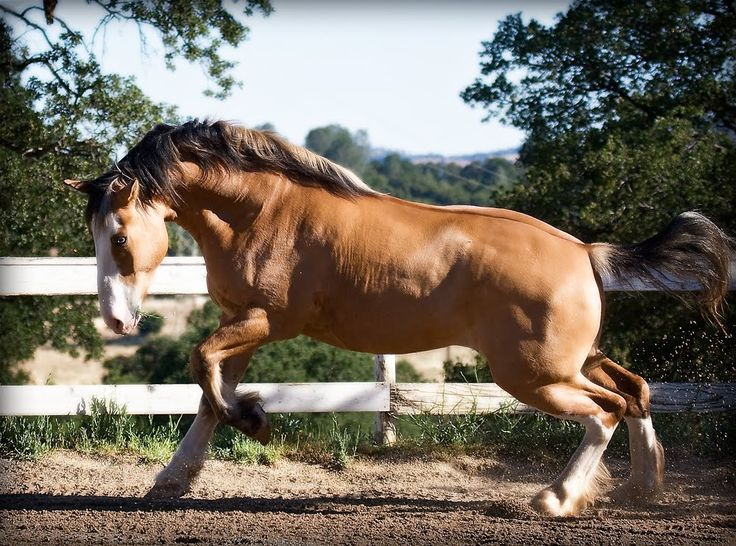 101 best Crossbreed and Grade Horses images on Pinterest ...