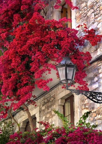 ITALIAN VISIONS PHOTOGRAPHY - PAUL MONTECALVO - florals TAORMINA, SICILY