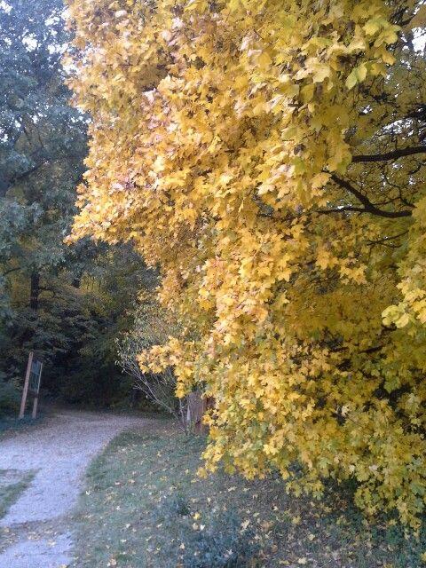 """Yellow""-tree."