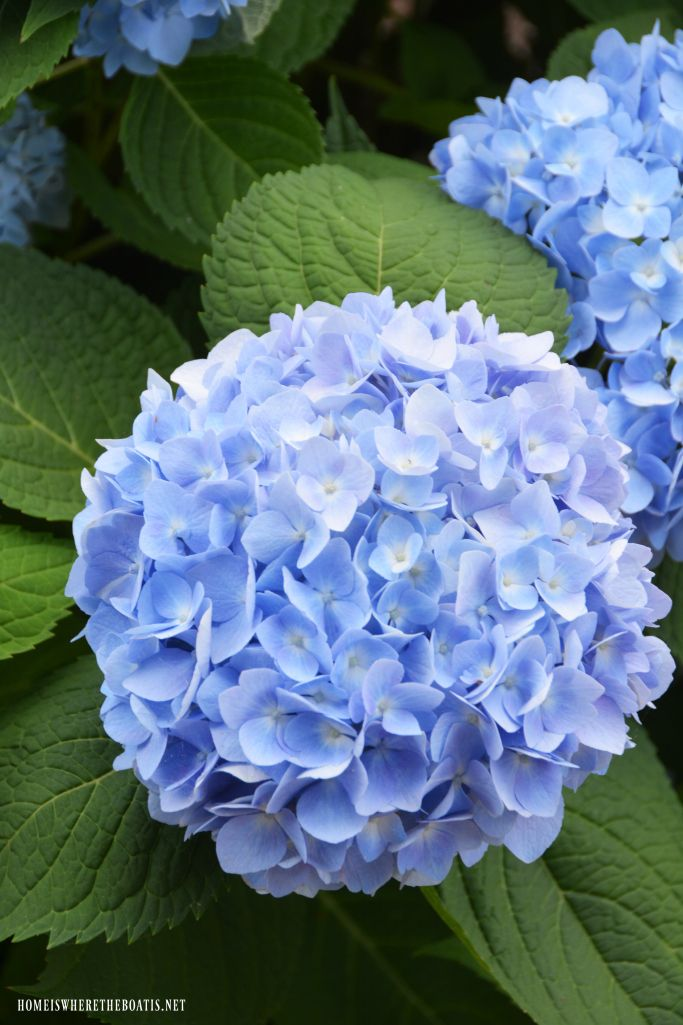 Summer Heat And Spring Flowers Around The Potting Shed Spring Flowers Flower Therapy Summer Hydrangeas