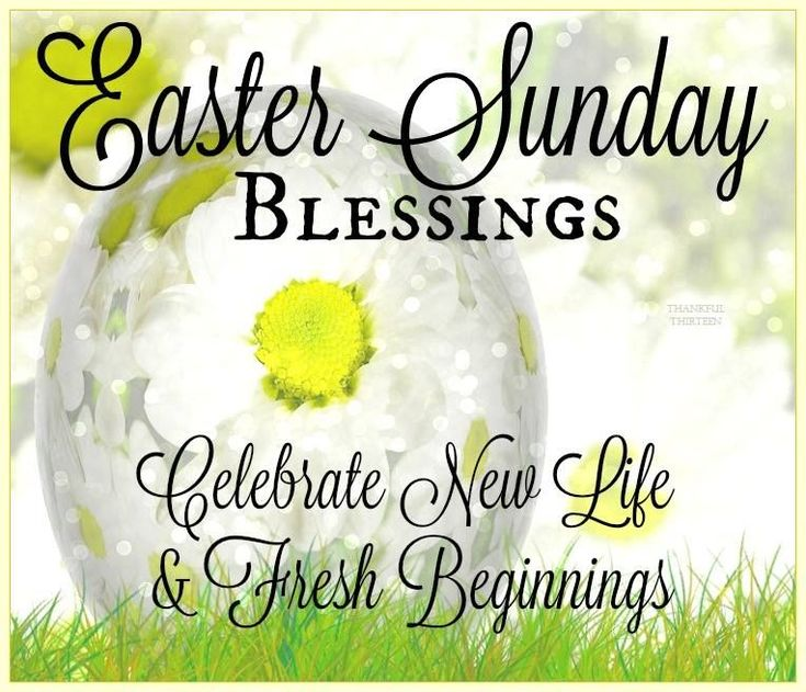 Happy Easter Pictures With Quotes: Best 25+ Funny Easter Quotes Ideas On Pinterest