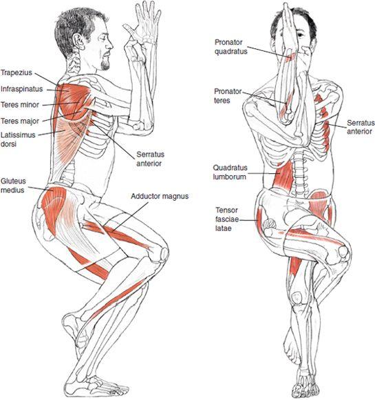 Garudasana - Leslie Kaminoff Yoga Anatomy, Sharon Ellis Illustration.