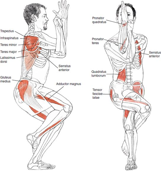Garudasana - Leslie Kaminoff Yoga Anatomy, Sharon Ellis Illustration.