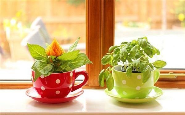 Свежесть зелени и трав круглый год: идеи для домашнего огорода на кухне.