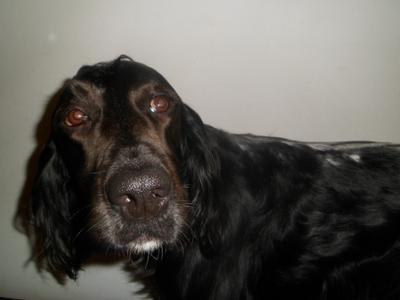 5 trucos para tu perro con bicarbonato