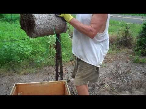 Tips on catching bee swarms. How to keep and get bees. Bee Swarm Let Down - YouTube
