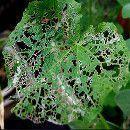 Pesticidas ecológicos y caseros para #plagas de la huerta y jardín ecoagricultor.com