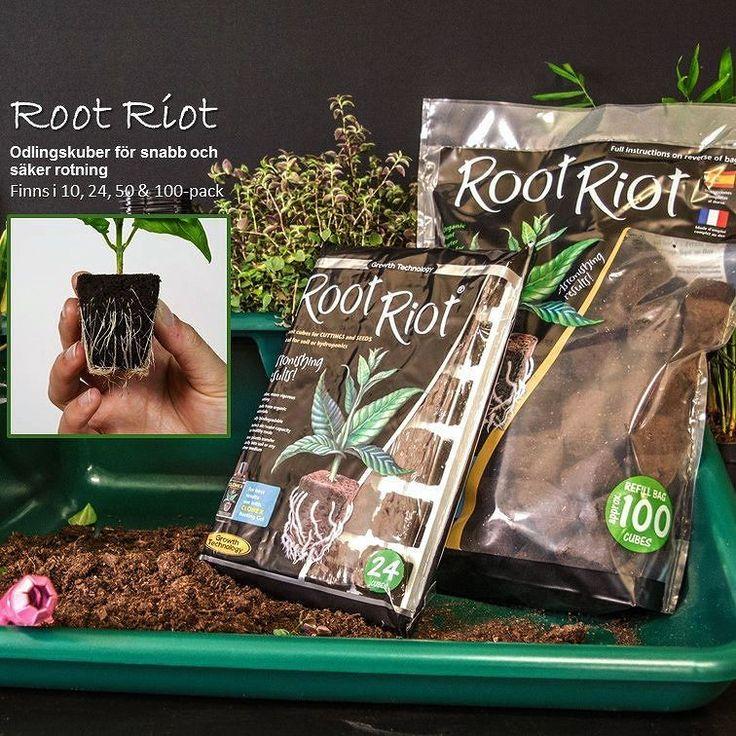 Root Riot superkuben som bidrar till optimal mängd fukt och luft vilket resulterar i snabb utveckling av rötter. Kombinera med något av våra miniväxthus och/eller växtbelysning vid uppdragning av frösådd och sticklingar. #wexthuset #hemodlat #sticklingar #frösådd #odlainne #odla #plantera #lantliv #hemträdgården #svenskträdgård #rötter