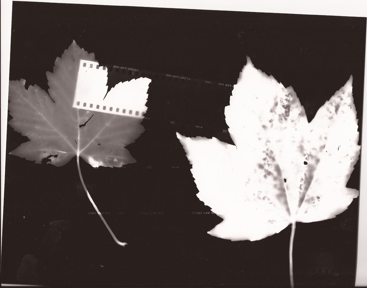 Photogram- leafs and film
