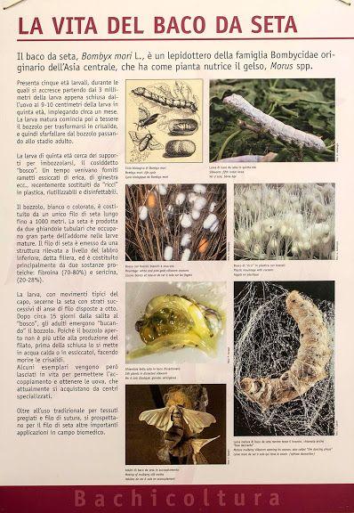 La coltura del gelso e l'allevamento del baco da seta furono per molto tempo ragione di orgoglio per l'agricoltura subalpina.