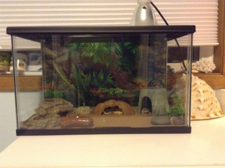 Here is my leopard gecko set up! Please tell me if this is correct, and tell me if anything is wrong! I am new to reptiles! I have a blue daylight 50 watt lightbulb, a small heat pad, which is right under one of my hides. The basking light is right over my basking rock, and I do have a mossy hide in the middle. I have a water dish, that doubles as a hide. I feed my Leo mealworms and crickets, and sometimes a waxworm. The temp is about 75-80 at night,  and 85-95 during the day. Underneath…