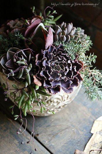 多肉植物|フローラのガーデニング・園芸作業日記-7ページ目