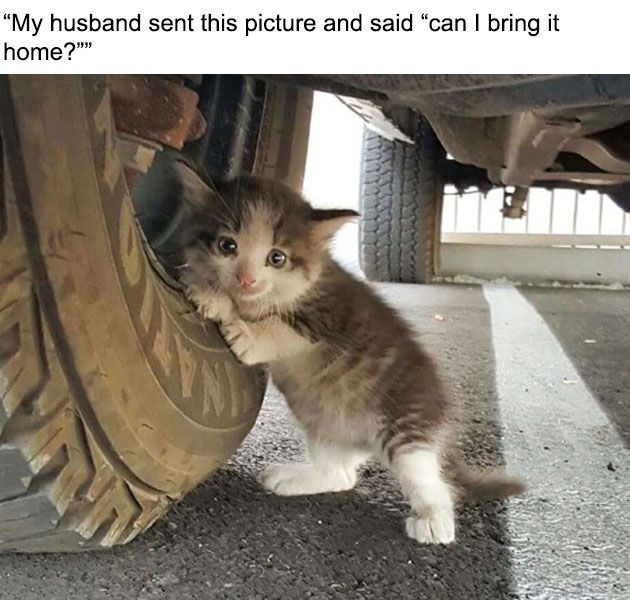 A kind-hearted man saw two little white boots under a truck by the tire and found a tiny kitten clinging to it. Her cat mother ran away and left her behind,