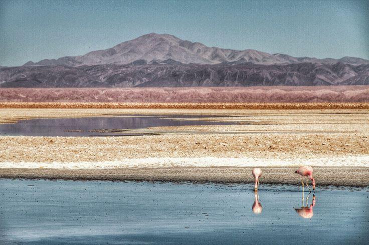 HDR Travel Pictures: Flamencos en el salar