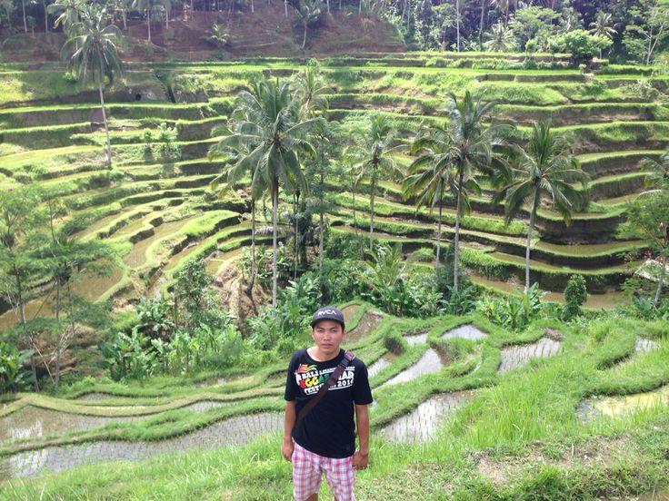 Cekingan rice terrace 'Bali'