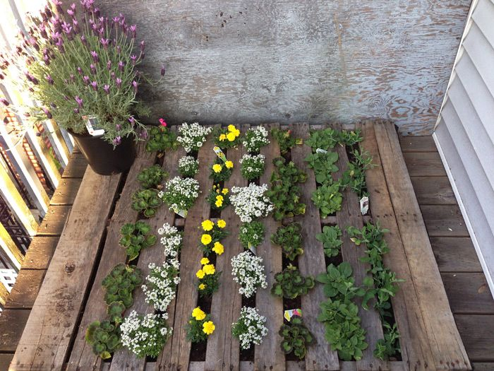 17 best images about pallet gardens on pinterest gardens for Garden decking from pallets