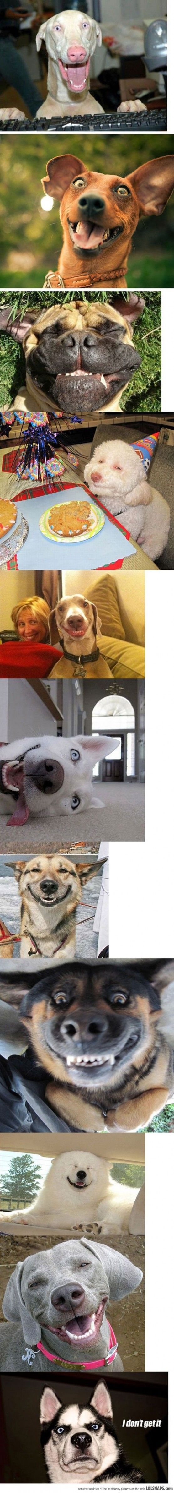 The happiest dogs of the internet. Do you get it?