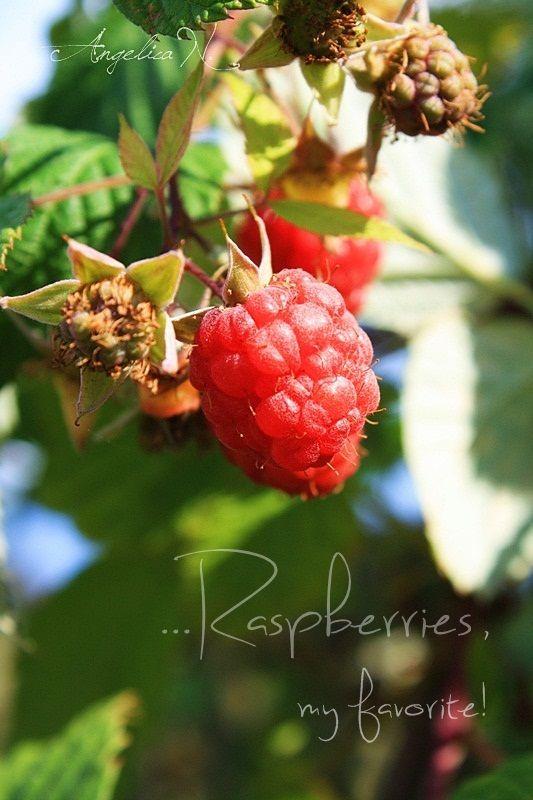 Frumoasa viata la tara...fructe din gradina:-)