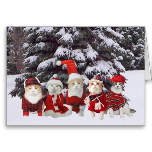 Funny Christmas Kitty Cats Cards