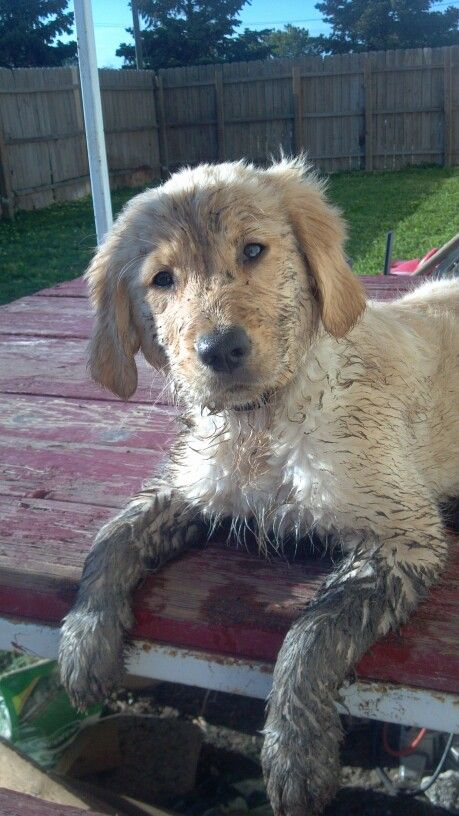 Best Dirty Dogs Images On Pinterest Puppies Best Friends - 28 times letting your dog play in the mud wasnt a good idea
