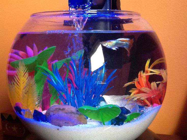 my home for a betta guppy and two african dwarf frogs fish bowl decorationsdwarf frogsaquarium ideasfish - Fish Tank Designs My Home