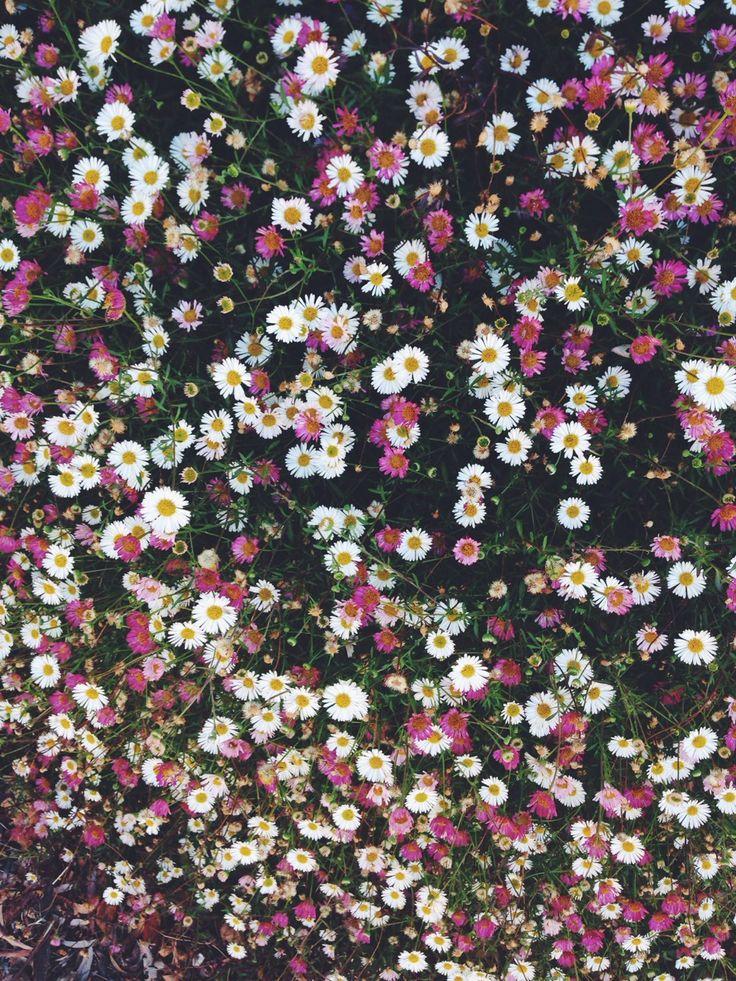 Flores blancas y rosas (Flor/Flower)