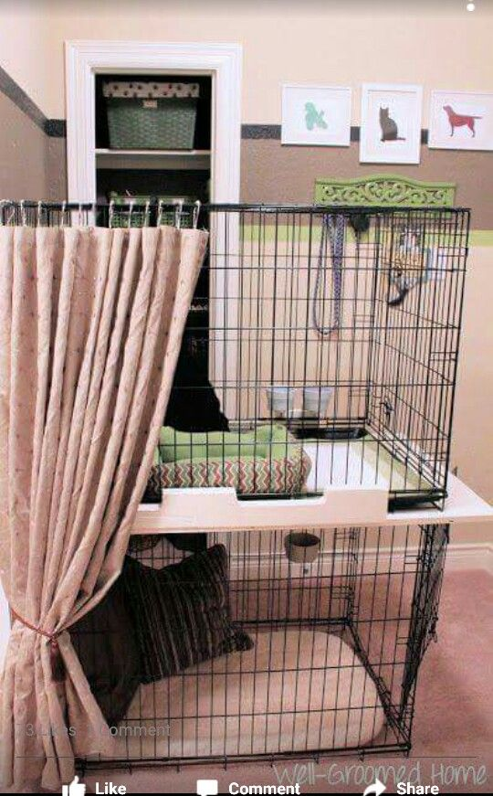 Diy Doggies Bunk Beds W Privacy Curtain So Cute Dog