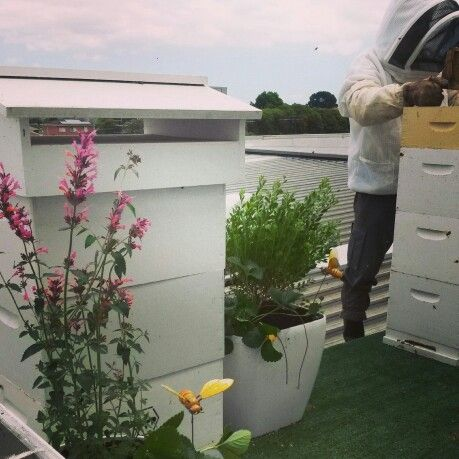 Doncaster BMW hives on the roof #Beekeeping #Urban #Melbourne