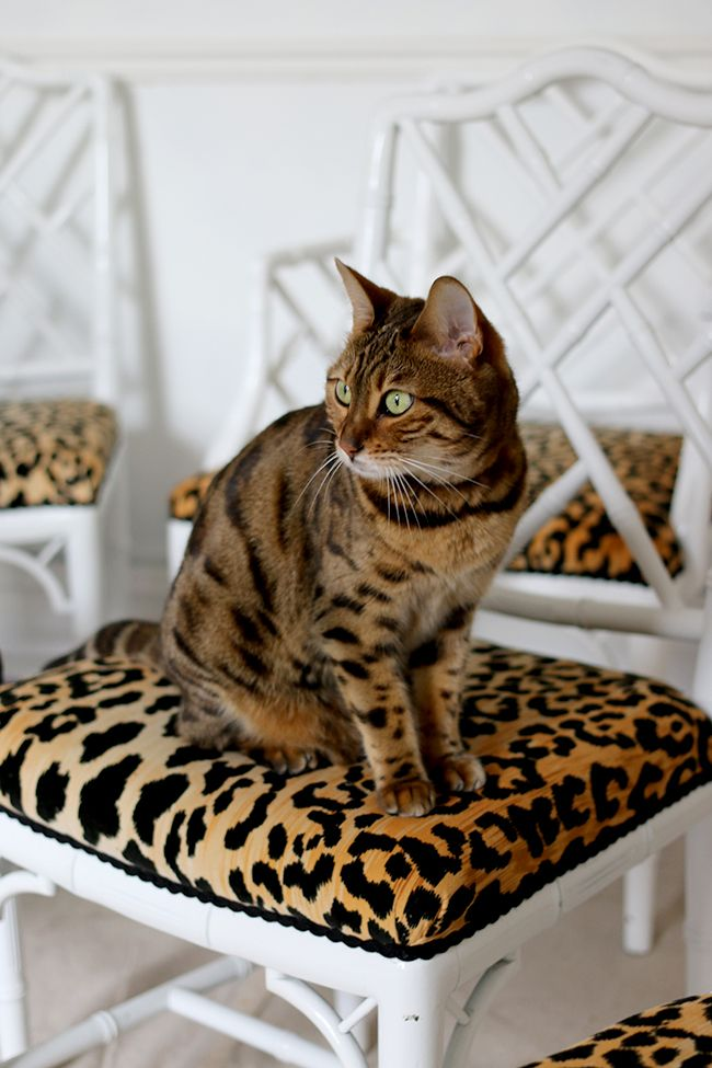 Bengal Cat On Leopard Print Jamil Natural Fabric Faux