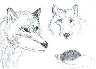 Два волка - Притча неизвестного происхождения