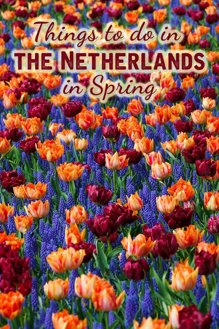 Things to do in the Netherlands in