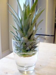 growing a pineapple plant: Growing Pineapple, Grow A Pineapple, Pineapple Plants, Cool Things, Plants Friends, Houses Plants, Growing A Pineapple, Food Hacks, Organizations Lemon