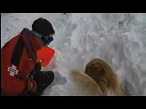 Donner the Avalanche Rescue Dog - YouTube (Sonlight, Core A, Week 30 :: Day 5)