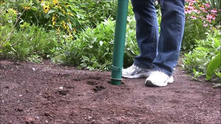 8 Best How To Get Rid Of Weeds Images On Pinterest