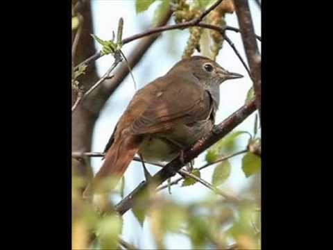 Μου παρήγγειλε τ' αηδόνι - Καλαματιανό Πελοποννήσου, Greek folk song - YouTube