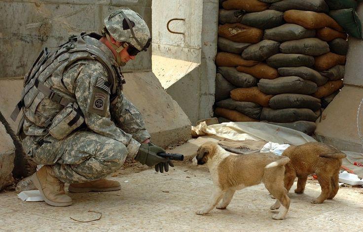 Soldado faz amizade com um filhote de cachorro. [Guerra do Iraque, c. 2003 – 2011]  Ler mais: http://www.contioutra.com/42-momentos-de-verdadeira-compaixao-humana-em-face-da-violencia/#ixzz45zbDQKRy