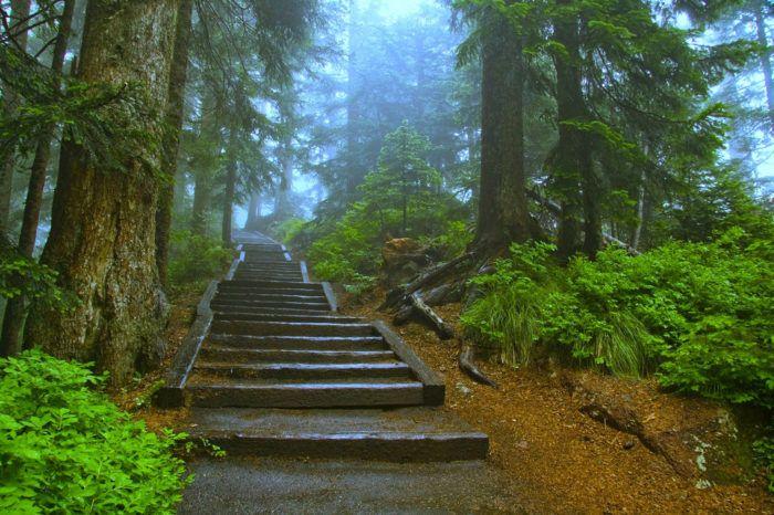 This scenic overlook in Oregon has unbeatable views of rolling evergreen hills…