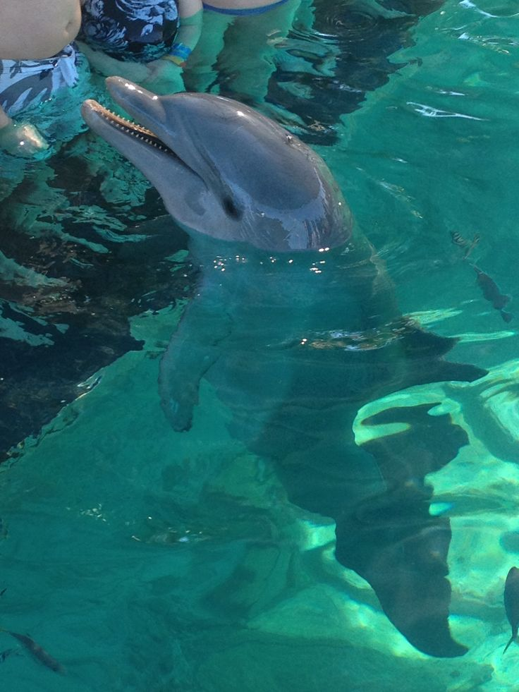 Sweetest dolphin - Bahamas
