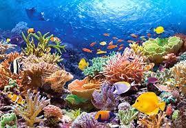 Resultado de imagen de arrecifes